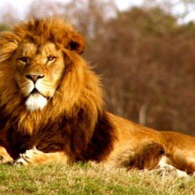 10 Haiwan Liar Paling Berbahaya Dan Ganas Di Dunia