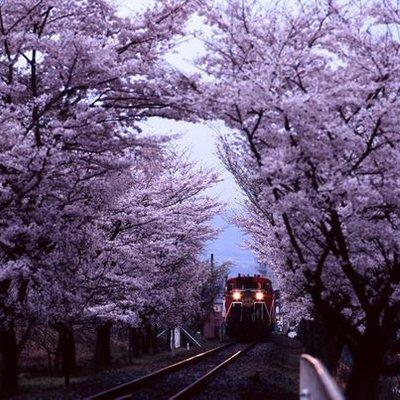 31 Kyoto Day 2 Arashiyama Bamboo Groove Sagano Romantic Train