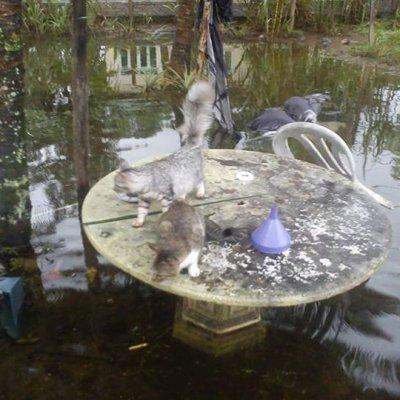 6 Gambar Menghayat Hati Apabila Kucing Menjadi Mangsa Banjir