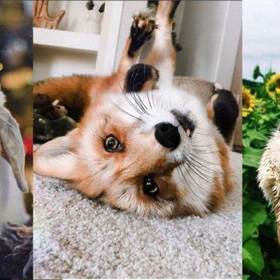 9 Akun Instagram Hewan Peliharaan Yang Layak Kamu Ikuti Lihat Foto Lucu Mereka Bikin Adem Di Hati