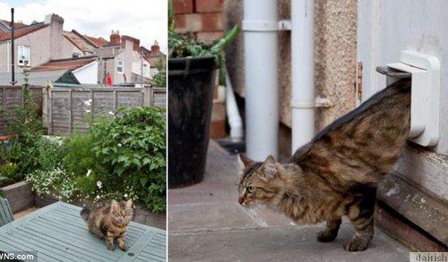 Ada Sesuatu Yang Menarik Dan Istimewanya Kucing Comel Ini