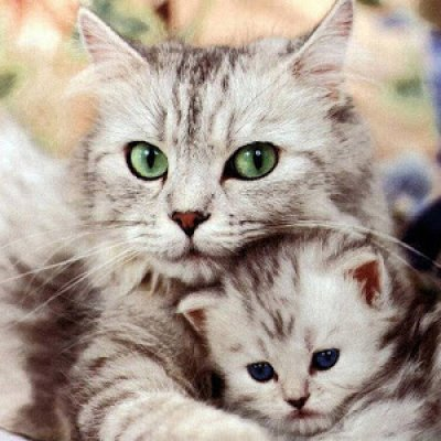 Adakah Anda Peminat Kucing Jom Baca Fakta Menarik Ini