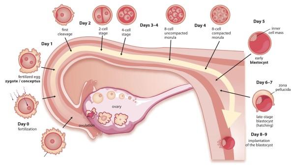 Adakah Endometriosis Mengganggu Kesuburan Wanita