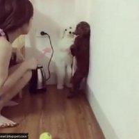 Anjing Ini Dihukum Berdiri Dengan 2 Kaki Oleh Wanita Ini