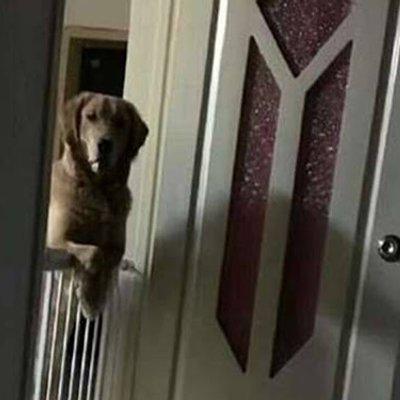 Anjing Ini Setiap Malam Perhatikan Tuannya Sehingga Tertidur Setelah Diselidik Rupa Rupanya Anjing Ini Lihat