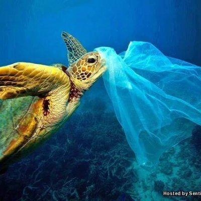 Apa Sebenarnya Kempen Hari Tanpa Beg Plastik