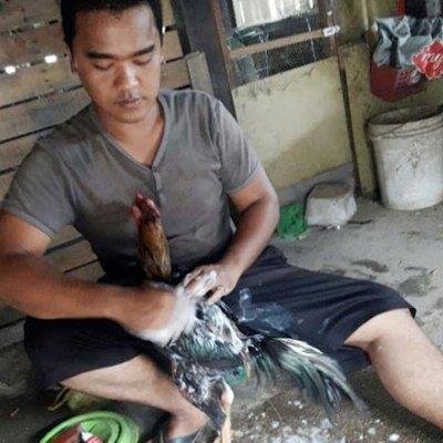 Ayam Kucing Habis Dimandi Jadi Lebih Sihat