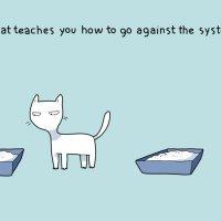Banyak Perkara Yang Org X Tahu Berkenaan Kucing