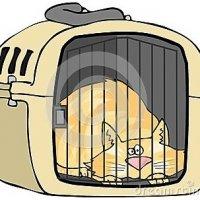 Bawa Kucing Sekali Balik Kampung