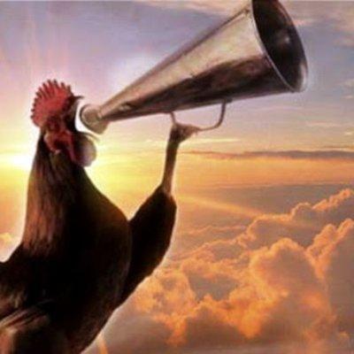 Berdoalah Ketika Mendengar Ayam Jantan Sedang Berkokok Di Malam Hari Insya Allah Cepat Dikabulkan