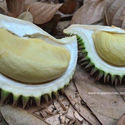 Berkunjung Ke Kebun Durian Pontianak Bersama Rombongan Salimah Kalbar