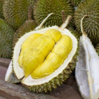 Bolehkah Makan Durian Semasa Hamil Ini Jawapannya