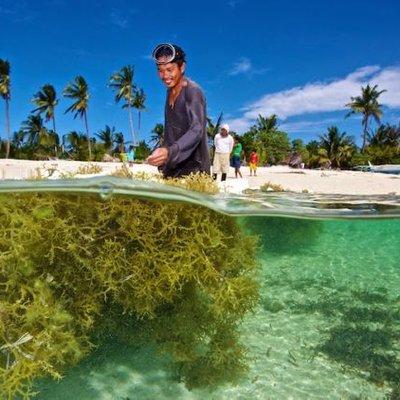 Bukan Cuma Snack Lezat Rumput Laut Ternyata Jadi Kunci Untuk Selamatkan Dunia Kamu Harus Tahu Nih