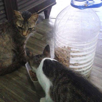 Cara Buat Bekas Makanan Kucing Automatik D I Y