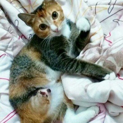 Cara Potong Kaki Kucing