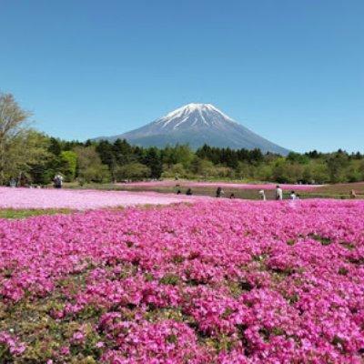 Cerita Lawatan Ke Jepun 3 Mengintai Gunung Fuji