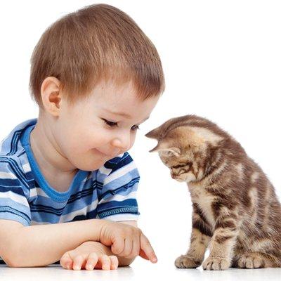 Doktor Veterinar Nasihat Ibu Bapa Patut Biarkan Anak Anak Bela Kucing Supaya Jadi Terapi Buat Anak