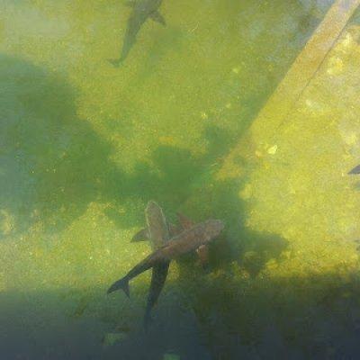Finding Nemo In Krabi