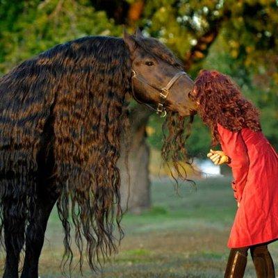 Gambar Terkini Kuda Paling Kacak Didunia Frederik Makin Mempersona