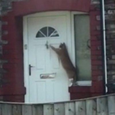 Gelagat Kucing Paling Sopan Di Britain Jadi Tular