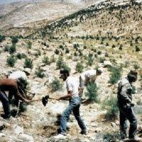 Hadis Pohon Gharqad Masuk Kurikulum Sekolah Israel