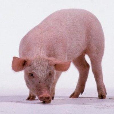 Hukum Memakan Daging Katak Menurut Agama Islam