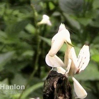 Ini Bukan Bunga