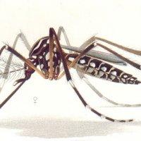 Kaedah Berkesan Membasmi Pembiakan Nyamuk Aedes