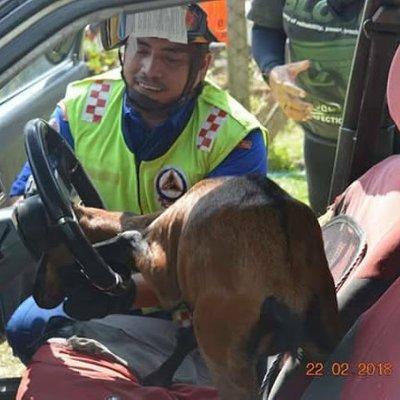 Kambing Jantan Disangka Babi Hutan Tersangkut Kepala Di Celah Stereng