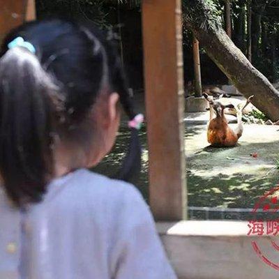 Kanggaru Mati Dibaling Dengan Batu Oleh Pengunjung Zoo