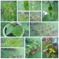 Kebun Sayuran Di Pekarangan Rumah