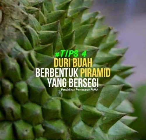 King Of Fruit Comeback Get Tips To Identify Durian Musang King