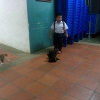 Kucing Pun Tahu Feeling