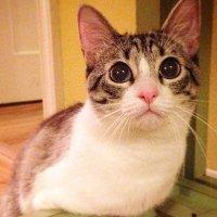 Lahir Tanpa 2 Kaki Depan Kucing Ini Jadi Selebriti Instagram