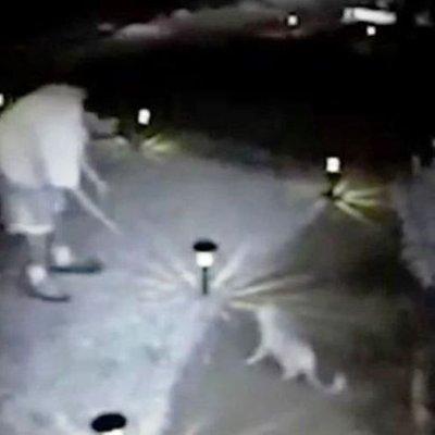 Lelaki Ini Dipenjara 16 Tahun Kerana Terbukti Bunuh 21 Ekor Kucing
