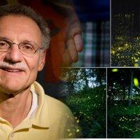 Misteri Kerlipan Cahaya Kunang Kunang Terungkai Selepas 60 Tahun