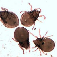 Mites Might Be Mighty Pest Control Method