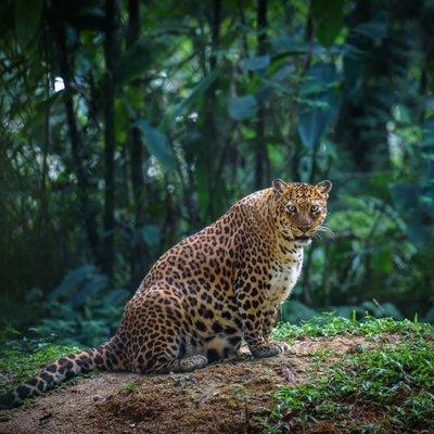 Ngaku Suka Hewan 17 Parade Binatang Bunting Ini Pasti Bikin Kamu Makin Gemas