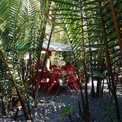 Nikmati Kesegaran Nira Nipah Dalam Taman Di Wilayah Mada