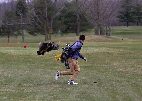 Peserta Remaja Pertandingan Golf Diserang Angsa