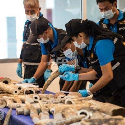 Philippines Seizes Hundreds Of Smuggled Animals