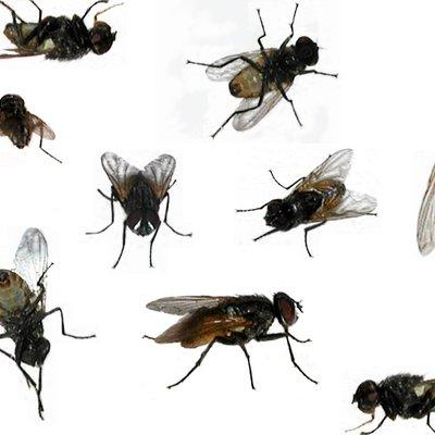 Rasulullah Mengatakan Lalat Adalah Penawar Penyakit