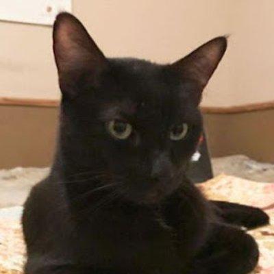 Remaja Terkejut Kucing Hilang Tiba Tiba Muncul Selepas Lima Tahun