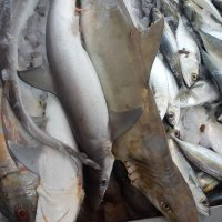 Resipi Ikan Yu
