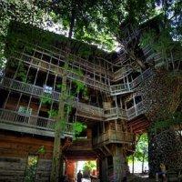 Rumah Pokok