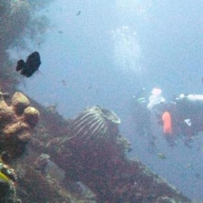 Satu Orang Hilang Dihantam Arus Laut Alor