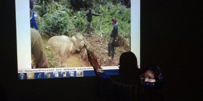 Selain Di Aceh Induk Gajah Juga Ditemukan Mati Di Langkat Sumut