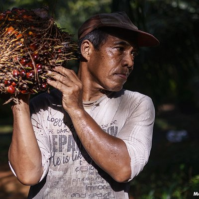Smallholders Stage Protest Against Eu Palm Oil Ban