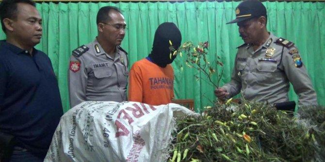 Tiga Karung Cabai Curian Jatuh Dari Motor Fajar Ditangkap Warga