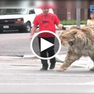 Viral Raja Kucing Yang Paling Besar Kat Dunia Pasti Buat